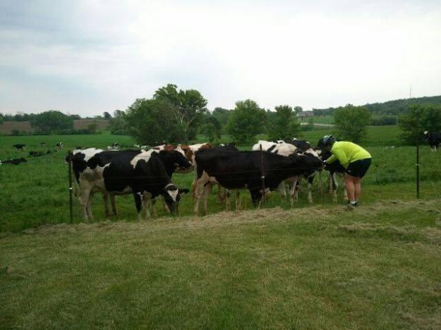 the cow whisperer
