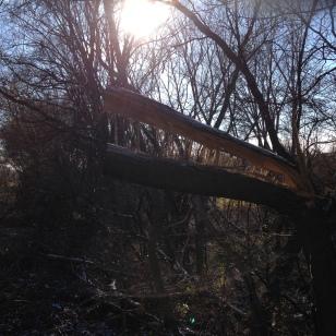 Fox River Trail