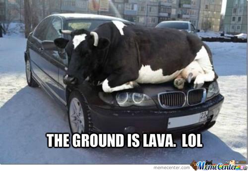 cow-lava_o_1622803.jpg