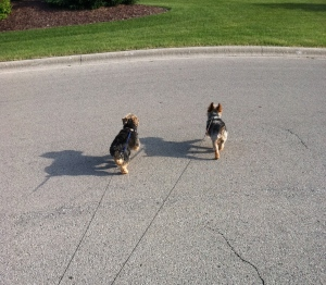 These dogs were made for walkin...