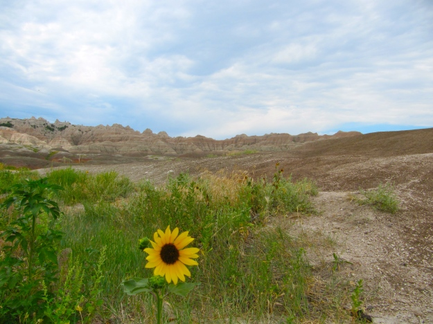 Summer in the Badlands