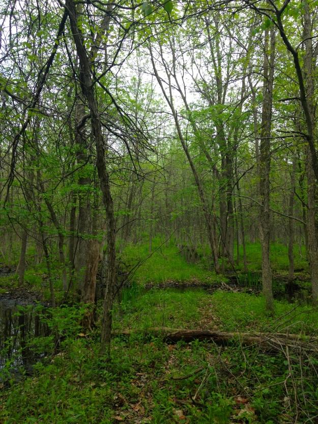 Trail thru a local bird sanctuary.