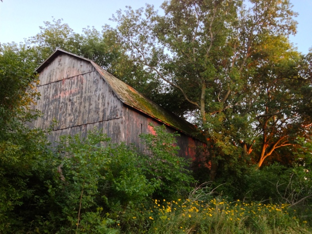 I walked past this old barn all summer.  I especially love how it looks when the late rays of the setting sun hit it.  I tried to capture that in this photo