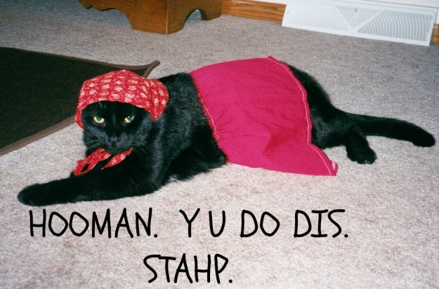 Stahp2cat