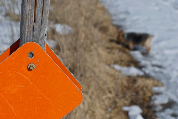 Snowmobile marker, with a fuzzy yorkie trail companion in the background.