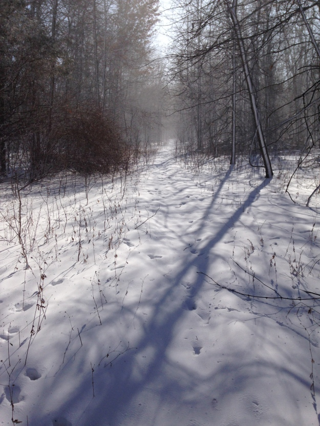 Taken on the coldest day of this past winter.   Windchills of -40.  But the sun was shining!  And no bugs!